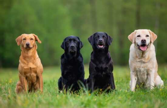 Jakie kolory widzi pies? Czy psy widzą kolory?