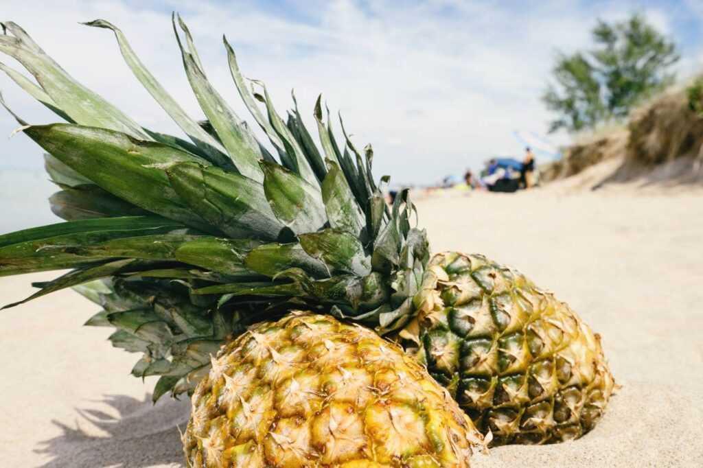 Ananasy na plaży
